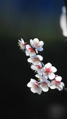 Красивые Обои На Айфон 7 Плюс Природа